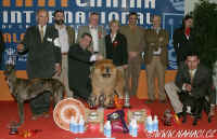 BIS at International dog show 5.3.2006 Sevilla chow-chow Chinabear Fabels N Fairy Tales.