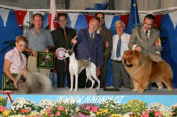 BIS Saturday-  judge: Kari Jarvinen, Finland, Whippet - female - Barnesmore It´s My Parti (Ch. Barnesmore Ace of Spades x Ch. Barnesmore Calypso Skies), Breeder: L. Thompson, Ireland, Owner: Blanco L. and Allan D. - Shikarah kennel, Madrid, Spain