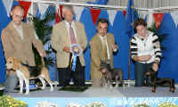 Damaura Al Yman All Marii Sapphire - BIS Puppy on Sunday