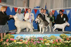 BIS Sunday - judge: Enrique Filippini, Argentina, Alaskan malamute - male - Zulem Magic Touch (Ch. Zulem I Can To Be Magic x Zulem She´s That Way), Breeder + owner:  Javier Cabello - Zulem kennel, Madrid, Spain