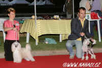 Best males at the Club dog show...