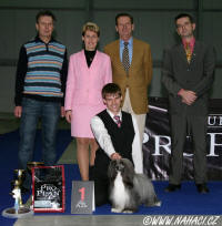 Ch. Oliver Modrý květ - Excelent 1, CAC, Club winner 2008, BOB + !!! BEST IN SHOW winner !!!!